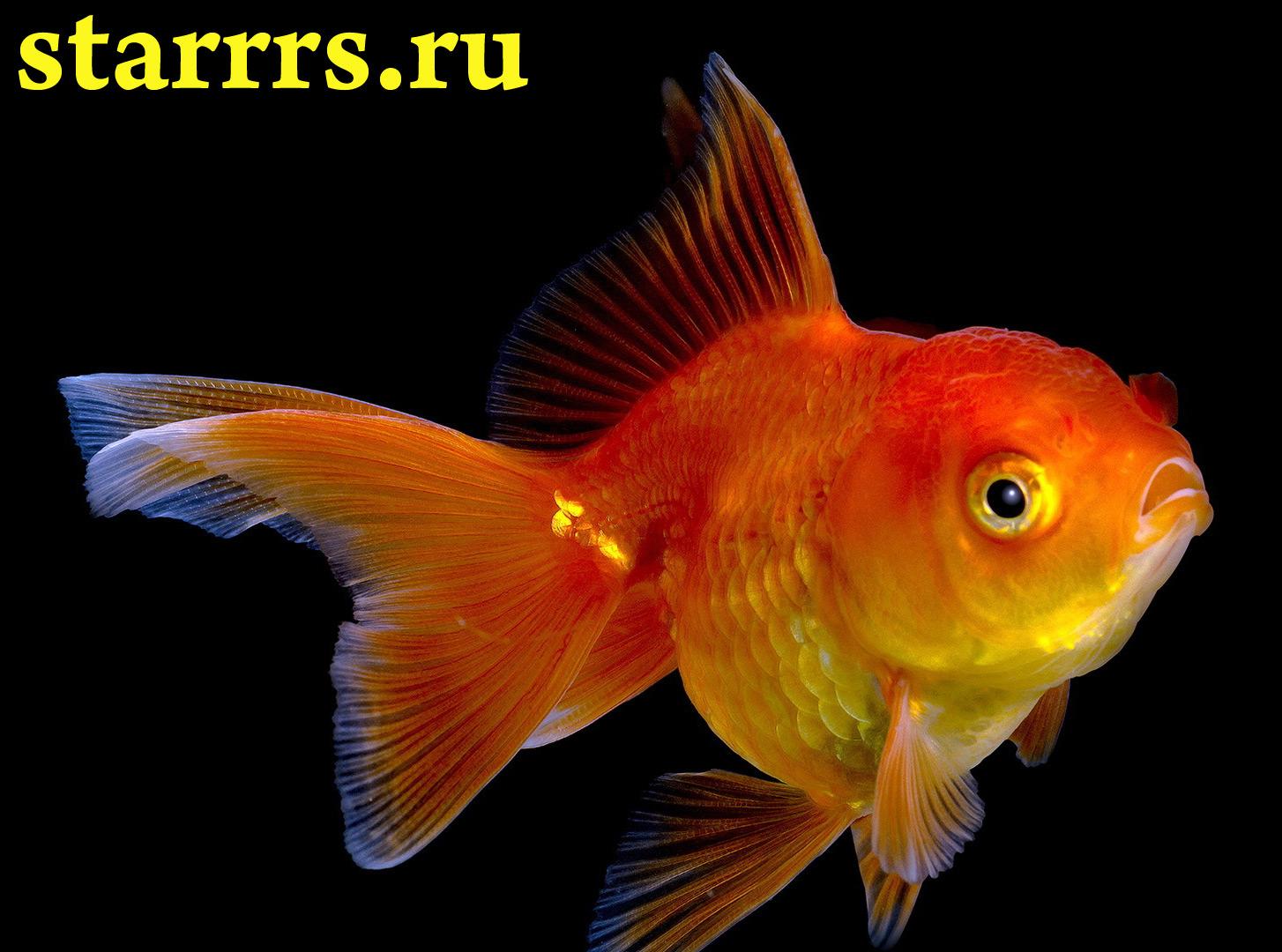 20-марта-это рыбы: