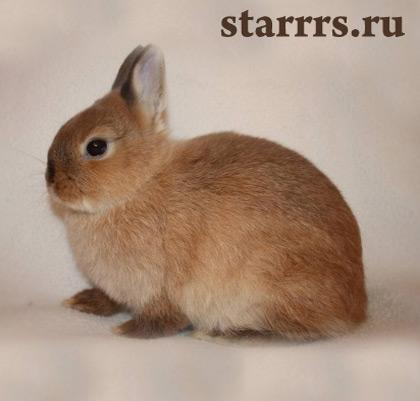 krolik_kot_zhyoltyy_zemlyanoy_rabbit_cat_yellow_earth