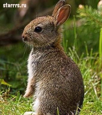 rebyonok_krolik_child_rabbit