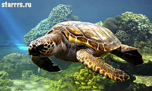 Черепаха, зороастрийский гороскоп