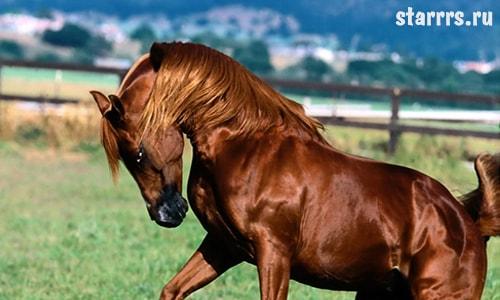 Конь, зороастрийский гороскоп