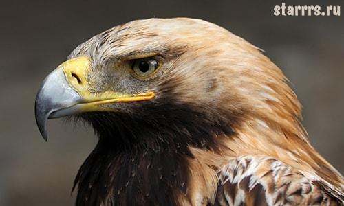 Орёл, зороастрийский гороскоп