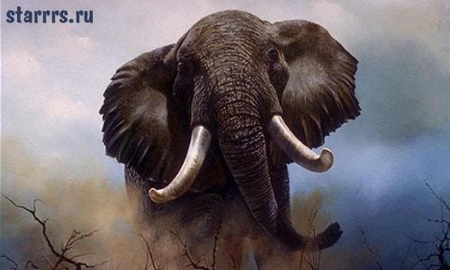 Слон, зороастрийский гороскоп